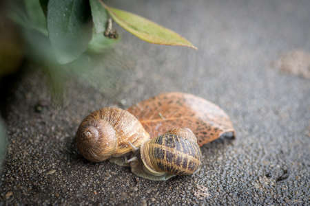 two snails in rainy day