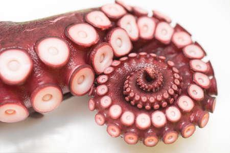 close up of octopus leg
