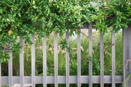 rustic fence with plants