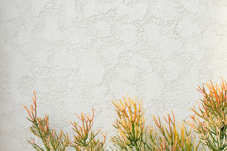 house wall wiith plant Stock Photo