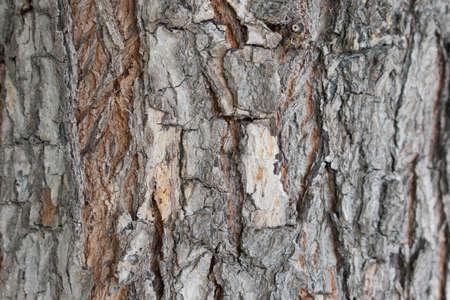 wood skin background