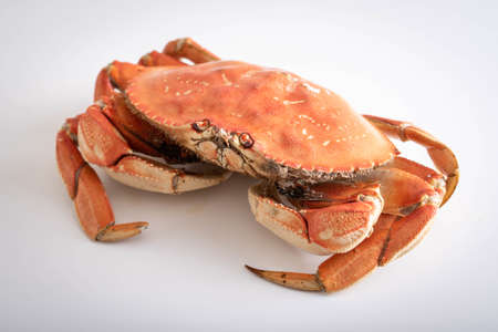 isolated dungeness crab on white background