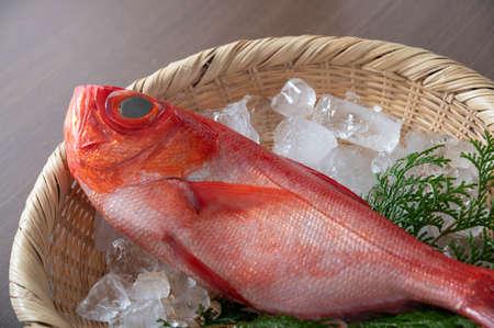 Kinmedai, japanese fresh whole red snapper