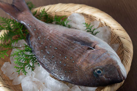 Tai, japanese fresh whole snapper on bamboo leaves