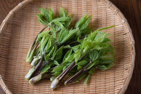 Koshiabura, Chengiopanax sciadophylloides shoots for tempura