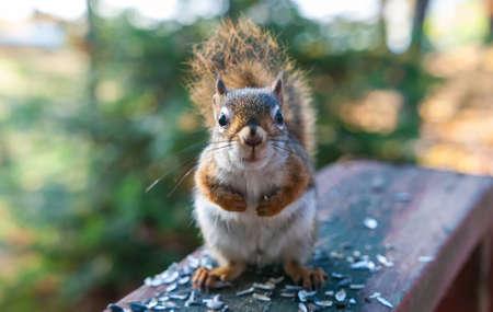 endearing: Got any breakfast?