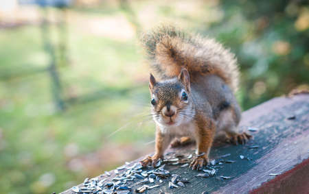 endearing: Hello There Squirrel