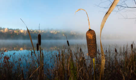 rushes: Rushes in the morning