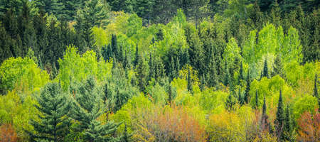 newness: Young trees and their leaves bursting with the newness of midspring offer up a contrasting array of greens.