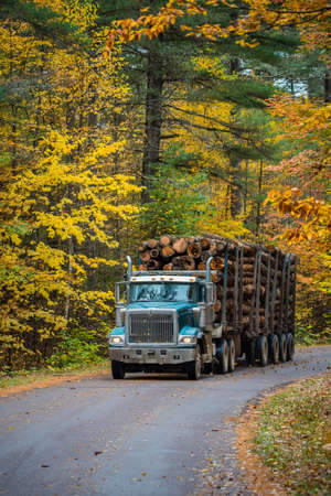 18 wheeler: Enemy of the forest, A logging truck hauling its load out of the woods.