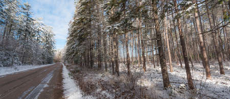 taller: Snow covered pines - tall tree forests along rural roads.
