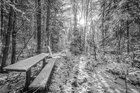 foot path: A snow covered bench in the woods along a walking trail. - Foot path in winter woods. Fresh fallen snow with backlit trees on winter day. Stock Photo