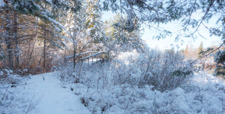 Footbridge: A fresh fallen snow covers a footbridge on a walking path in the woods.  Nature winter scenic.