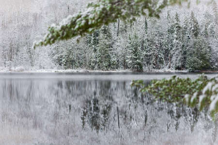 subdued: Winter Mirage on the lake.  Like a mirror, still waters reflect the forests next to it.  A light dusting of snow under subdued light of grey November sky makes for beautiful waterfront forest. De-focused green boughs in foreground.