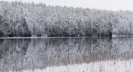 Winter Mirage on the lake.  Like a mirror, still waters reflect the forests next to it.  A light dusting of snow under subdued light of grey November sky makes for beautiful waterfront forest. Reklamní fotografie