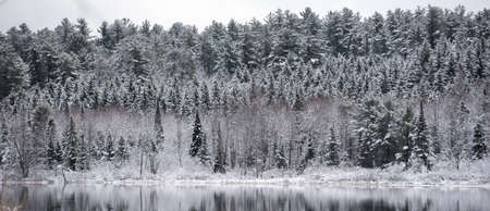 subdued: Winter waterfront forests.  Light snow under subdued lead grey overcast winter sky makes beautiful waterfront forest.