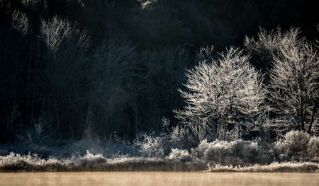 dawns: Morning sun dawns on ice and frost covered wetland trees and foliage.    Trees and bushes at the lakes edge, glow and shine with coats of fresh frost bathed in sunlight.