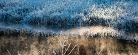emit: Dawn.  Ice and frost covered wetland foliage.  Cool Bluegrass bushes.   Frost encrusted marsh reeds and foliage emit a cool blue light in the shade of nearby trees.