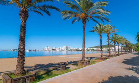 mid morning: Mid morning sun, walk along rocky shoreline beach near the city.   Rows of palm trees line the beach, sunny day along the waters edge in Ibiza, St Antoni de Portmany Balearic Islands, Spain.