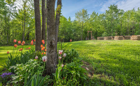 front  or back  yard: Shaded tulip and flower garden .   Country front lawn springtime. Sunny day setting for an outdoor, back yard wedding. Stock Photo