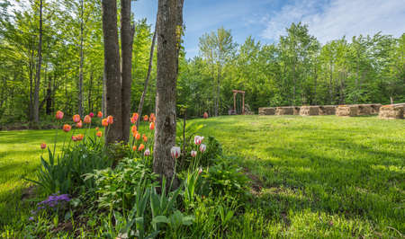 Shaded tulip and flower garden .   Country front lawn springtime. Sunny day setting for an outdoor, back yard wedding. Stock Photo