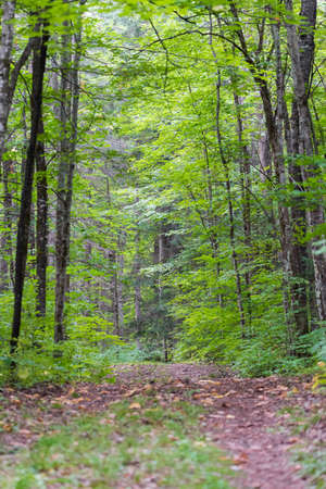 deciduous woodland: Walking trail along the deep interior of an Eastern Ontario forest in summer. Woodland walking trail in deciduous and mixed forests trails in a quiet Eastern Ontario forest in mid summer.
