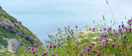 nfld: Wildflowers grow in fields on steep slopes near high cliffs on Signal Hill on a Summer day.   Cloud and light over Newfoundland coastline cliffs, St Johns, Canada. Stock Photo