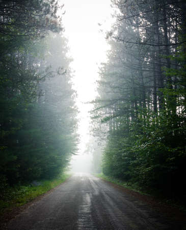 encroaching: Single point perspective down fog obscured, forest-lined road.   Warm moisture into cooler air makes fog rise all along a wooded roadway.  Deciduous Eastern Ontario forest.