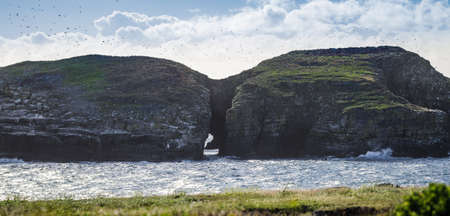 puffins: Hundreds of flying birds as sun shines on shadowy bird island in Maberly, Newfoundland.  Ancient rock features natural tunnel & hosts thousands of cormorant, puffins, gulls & other seabirds.