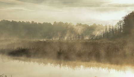 Mist rises from a marsh on an Ontario lake.   Contrail in pale summer sky.  Sunrise over narrow passage of a lake.   A row of swamped, dying spruce trees is enshrouded in fog. Stock Photo