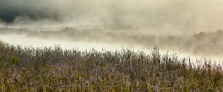 Frost encrusted sawgrass and bulrushes in a wetland as early morning mist rises from warm moist marsh as sun comes up. Frost encrusted marshland foliage in sunrise mist. Stock Photo