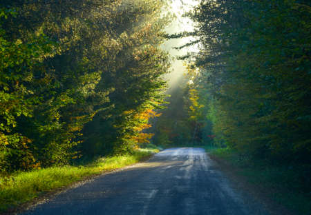 Bright sun shines softly on a forest over shady wooded road.   Single point perspective down tree-lined narrow road in midst of a mixed specie Ontario forest.