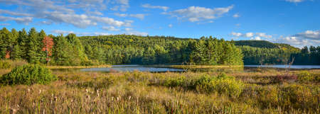Sunny Summertime marsh wetlands mixed with boreal forest woodland wilderness as viewed from the roadside of an Ontario, Canada highway. Stock Photo