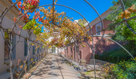 shrubbery: Sunny autumn garden walkway, featuring metal vine growing frame overhead.  Provides for shaded passage in summer to & from washrooms building, located on right, behind Prado Museum in Madrid Spain. Editorial