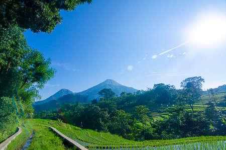 an epic view of Mount Penanggungan with rice field
