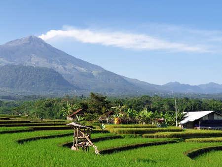 Eruption of Mount Arjuna/Arjuno-Welirang with rice paddies epic view Banco de Imagens - 129796198