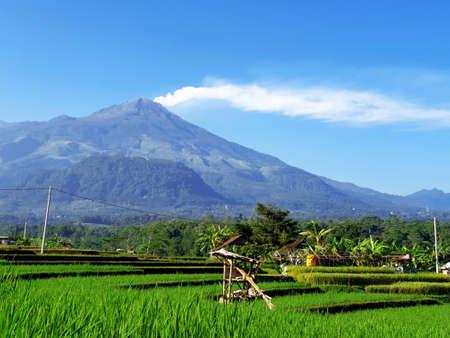 Eruption of Mount Arjuna/Arjuno-Welirang with rice paddies epic view Banco de Imagens - 129796200