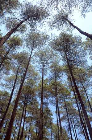 trees and sky in the forest Banco de Imagens