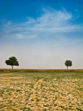 Two trees photo