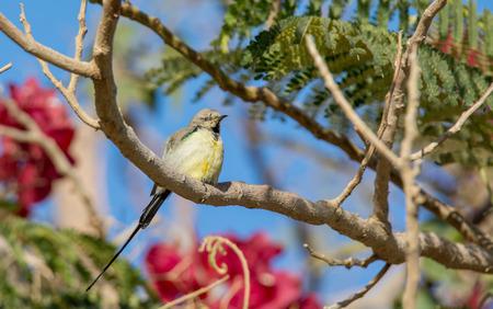 the nile: Nile Valley Sun Bird