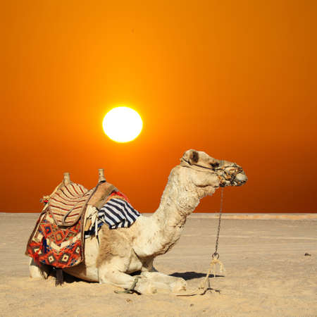 Beautiful sitting in the desert under the sun Banco de Imagens