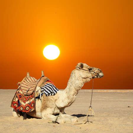 Belle séance dans le désert sous le soleil