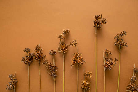 Dried flowers and plants tan color background