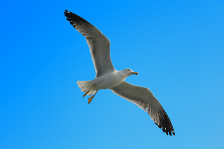 A seagull flying on a blue sky