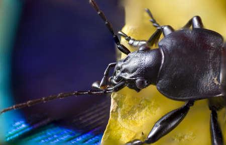 black: Black Bug Stock Photo