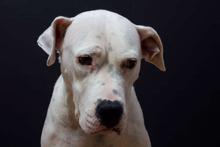 minimally: Dog  Maya Stock Photo