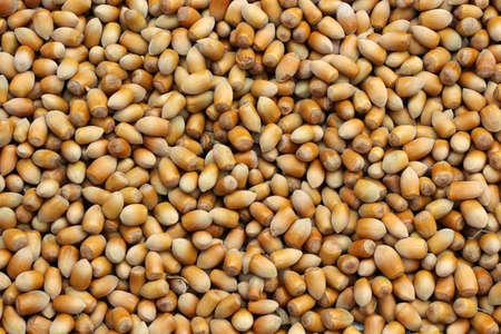 In a nut varieties grown in Turkey