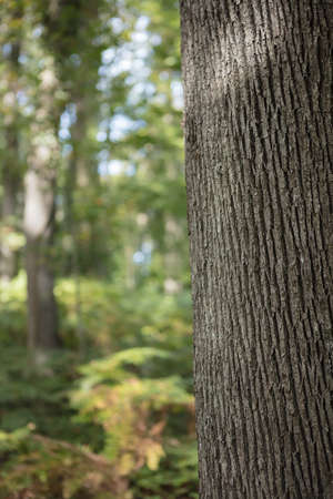 discolored: Tree trunk detail texture as natural background. Stock Photo
