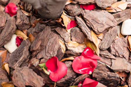 Landscape bark and hardwood chips are often used around flowerbeds, trees and shrubs as a mulch material. They add a decorative touch to landscape Stock Photo