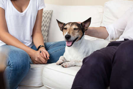 Contented dog with a happy smile and eyes closed in pleasure lying on a sofa between its owners being stroked by the man Banque d'images